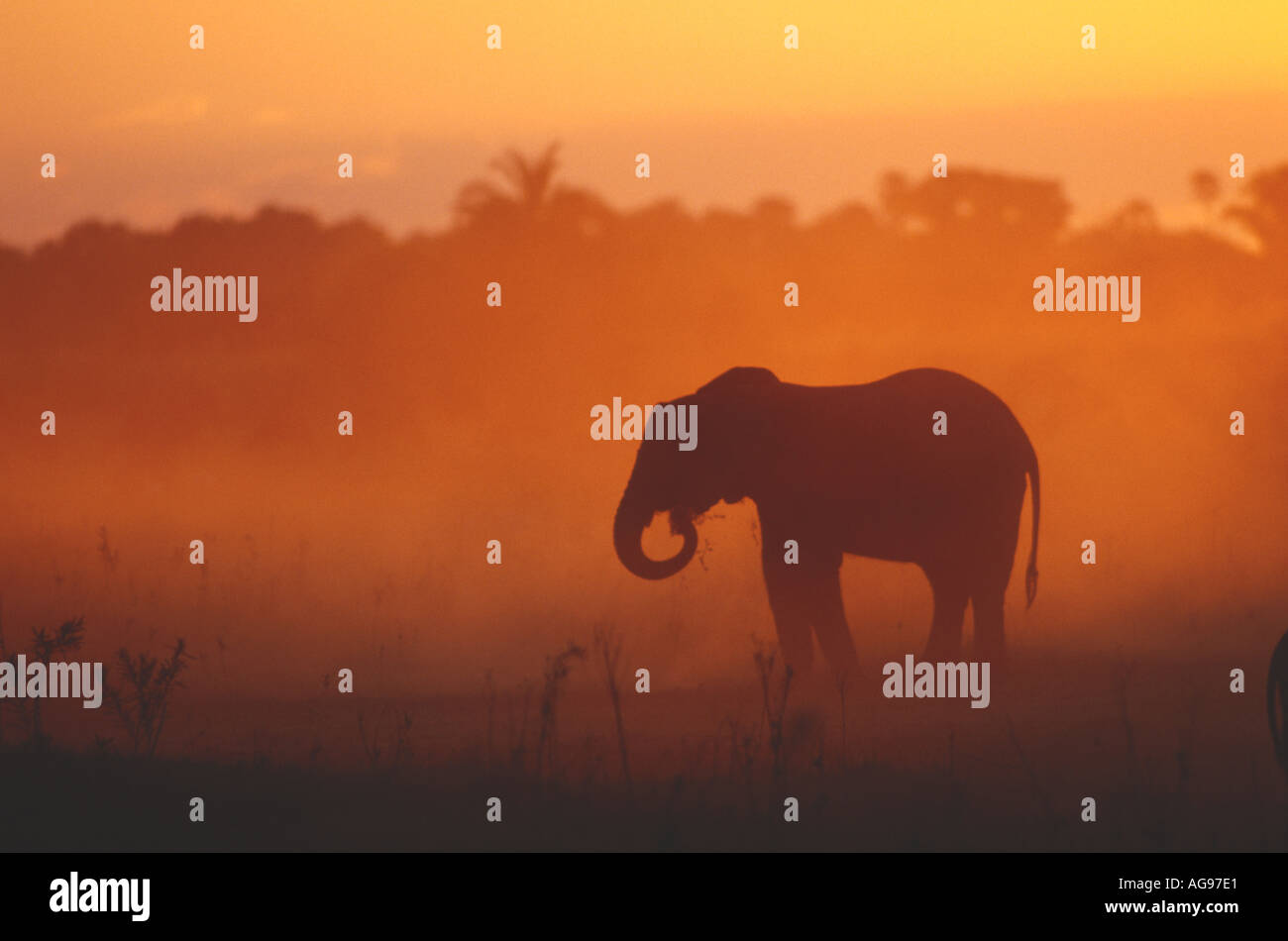 Elephant kicking up dust in Botswana - Stock Image