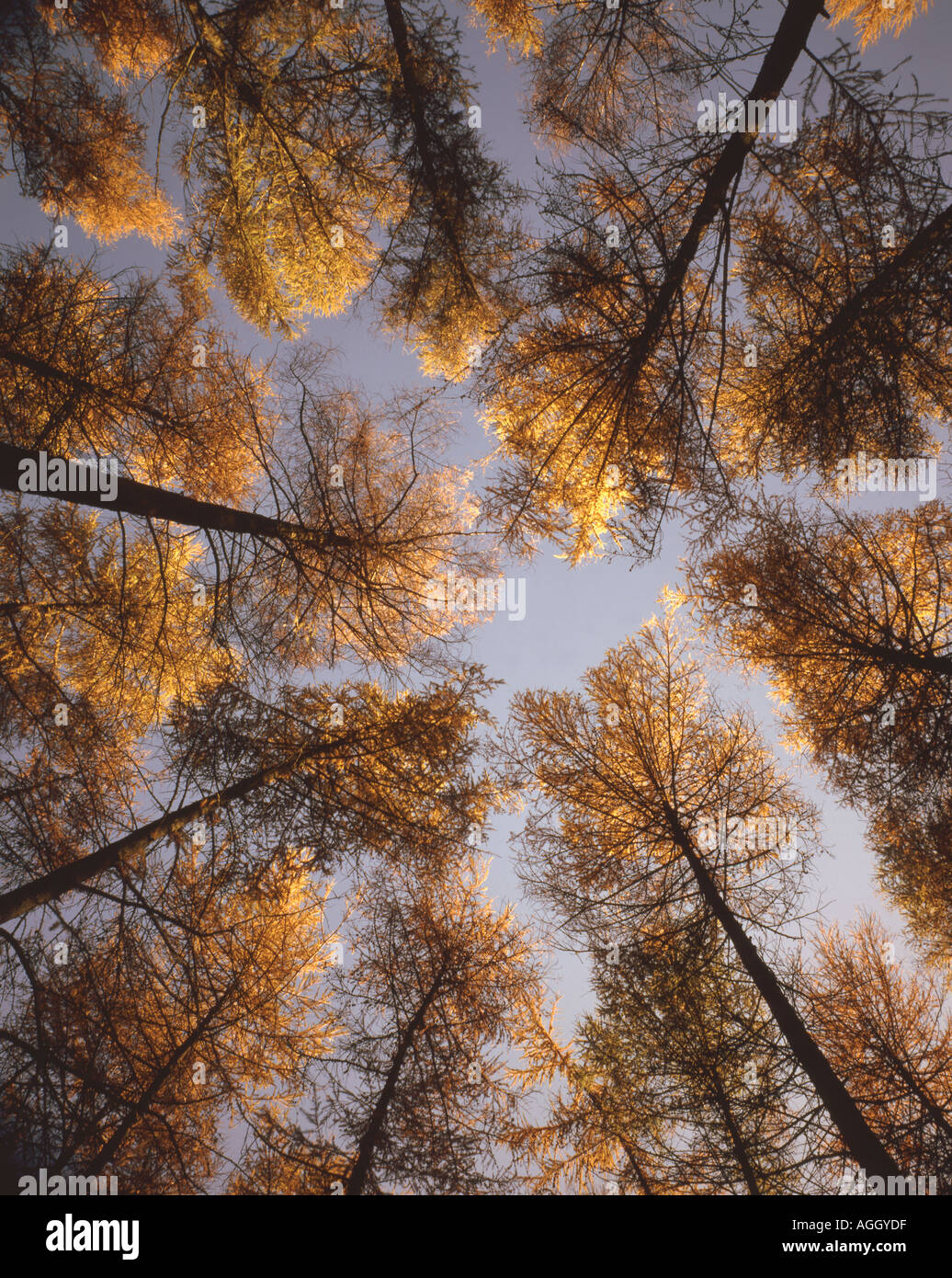 Autumn forest - Stock Image