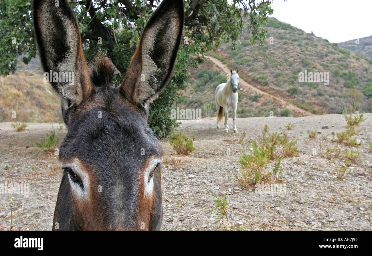 Donkey and Horse, Southern Spain