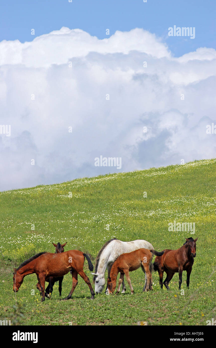 2 Landscape of Spanish Horses in a Field