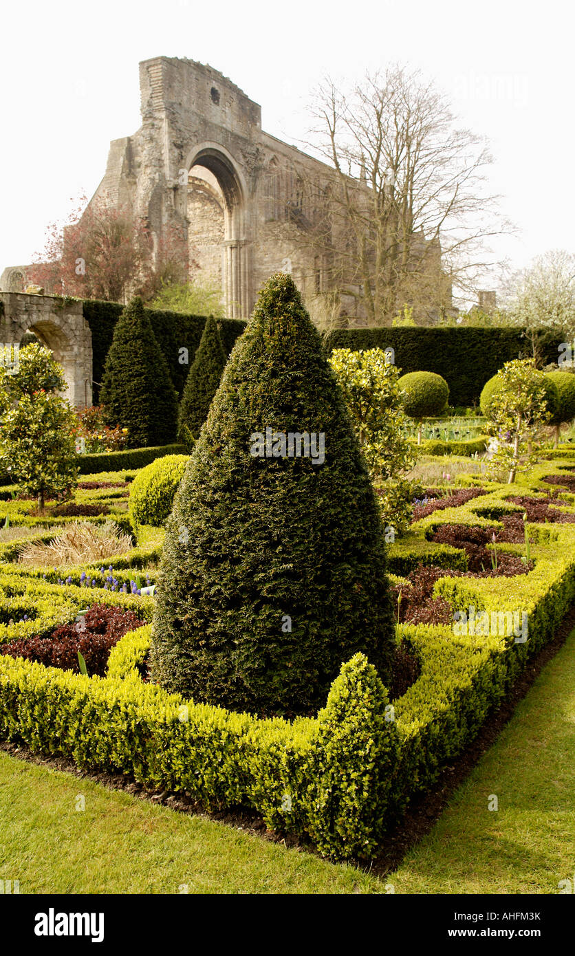 Low clipped hedges and topiary in knot garden with ruined abbey in ...