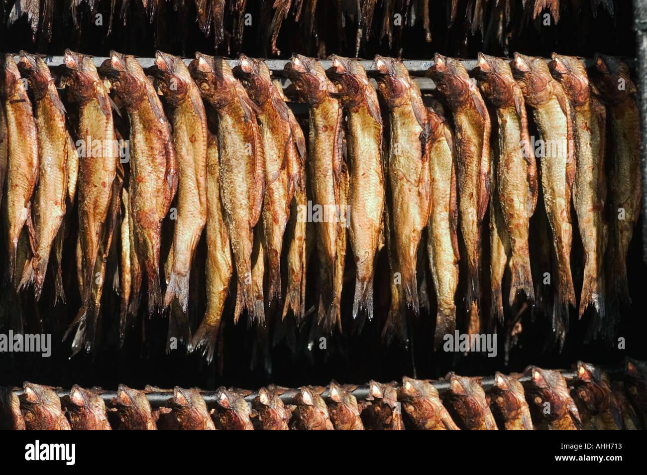 Herring hang in smokehouse Cap Pele New Brunswick Canada - Stock Image