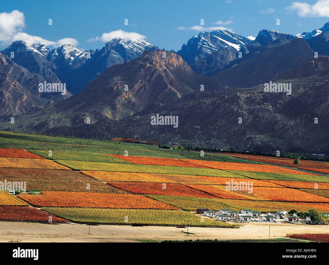 A vineyard on Hex River valley in autumn with snow capped mountains in distance Western Cape South Africa - Stock Image