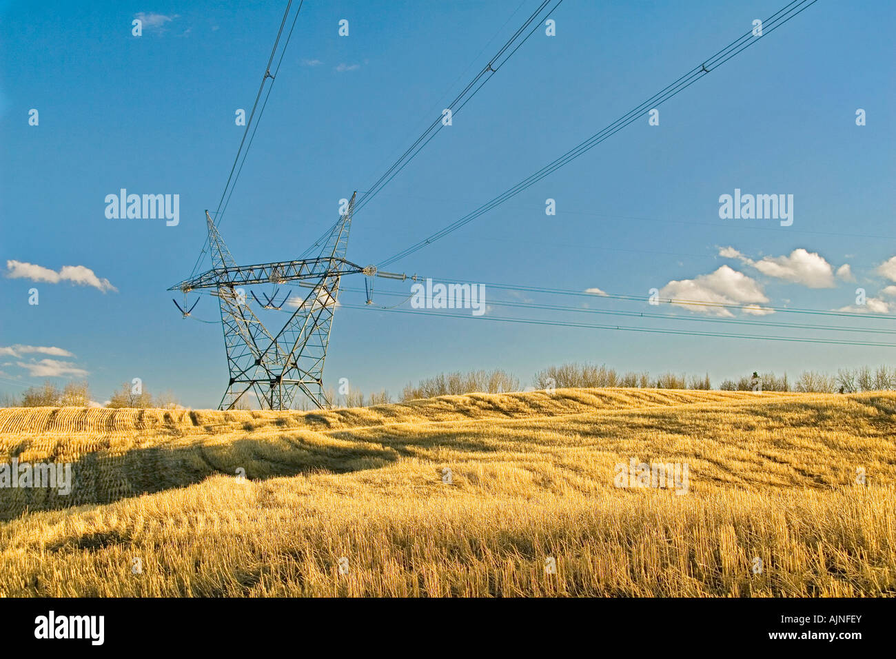 High tension tower in a field, Alberta, Canada - Stock Image