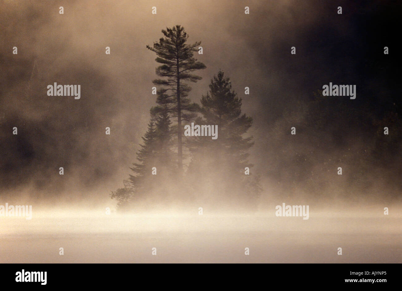 a-tree-on-a-small-island-emerges-from-a-dawn-mist-in-mont-tremblant-AJYNP5.jpg