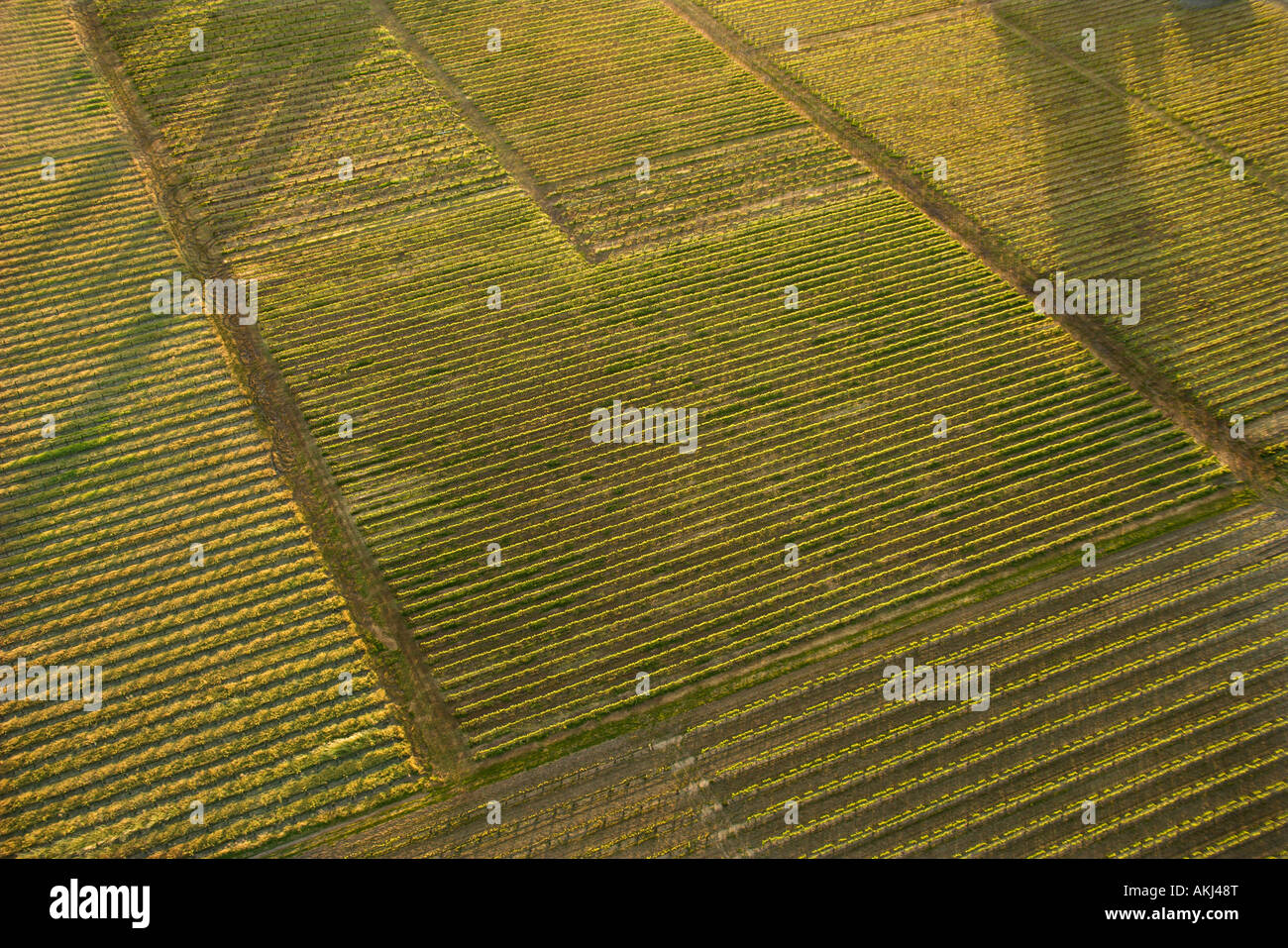 Aerial of agricultural cropland - Stock Image