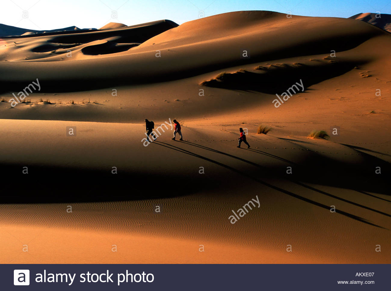 Three people trek over the sand dunes in the Sahara desert in Morocco at sunrise - Stock Image
