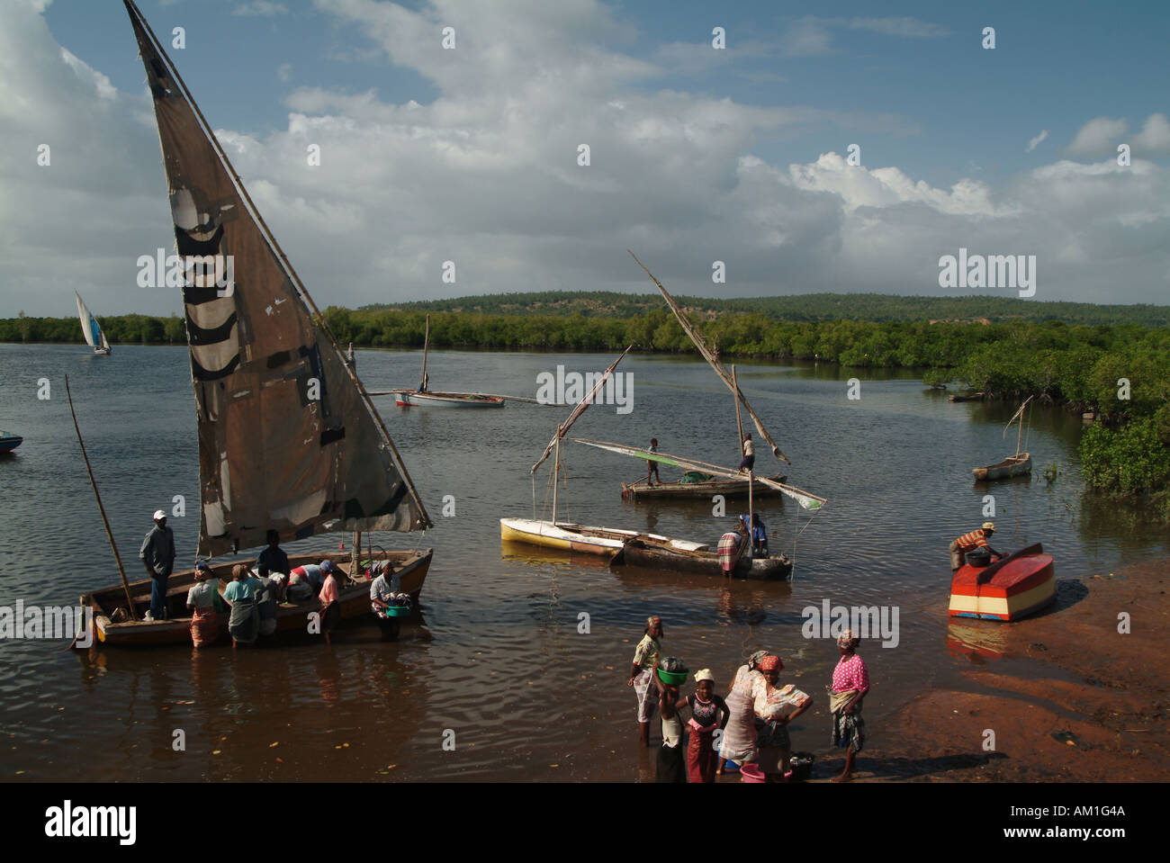 Sailing dhows moored in the mangrove forest for transportation to the mainland. Linga Linga, Inhambane, Mozambique, Stock Photo