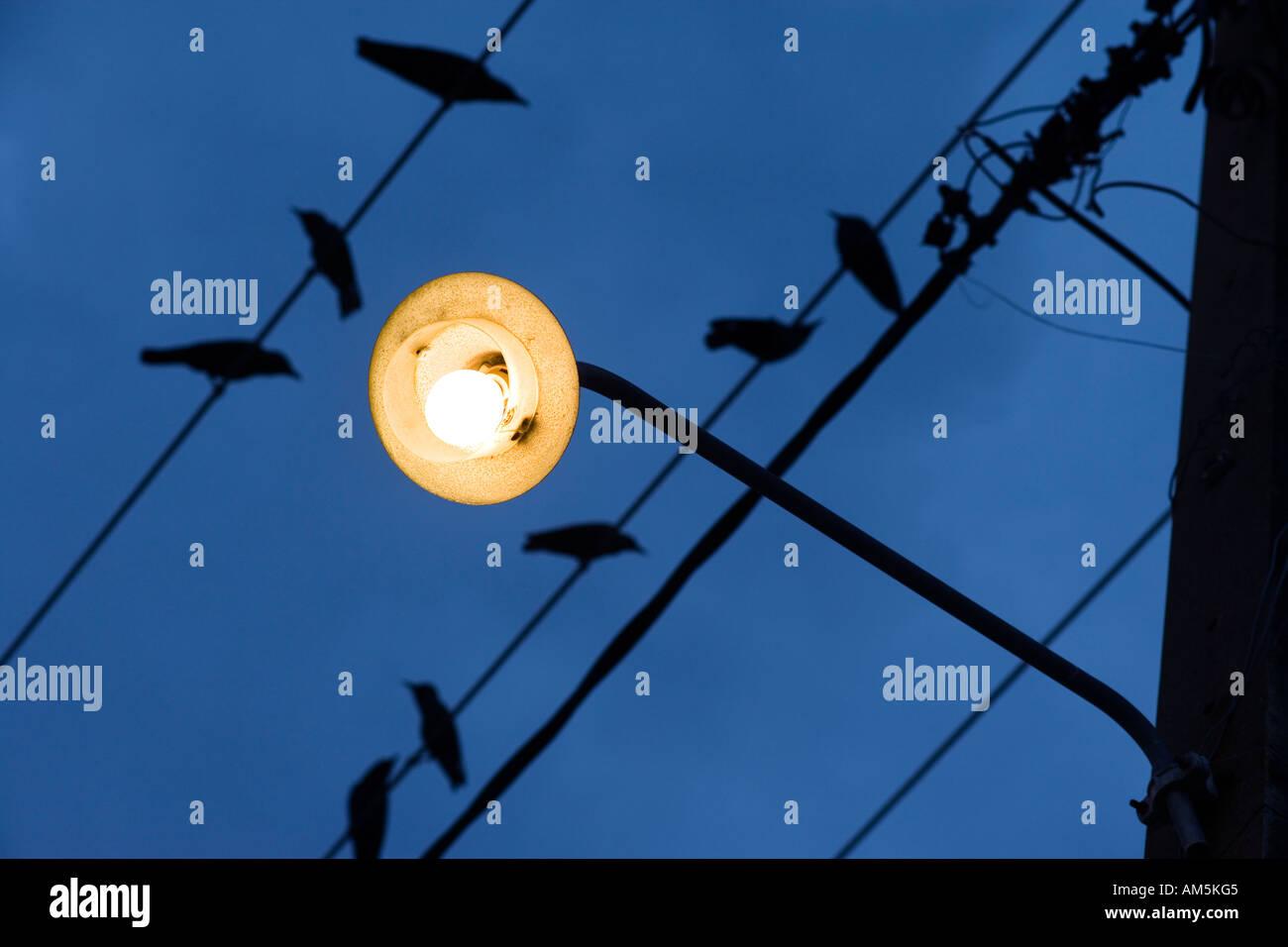https://c7.alamy.com/comp/AM5KG5/birds-on-a-wire-yellow-street-lamp-against-a-dark-blue-sky-AM5KG5.jpg