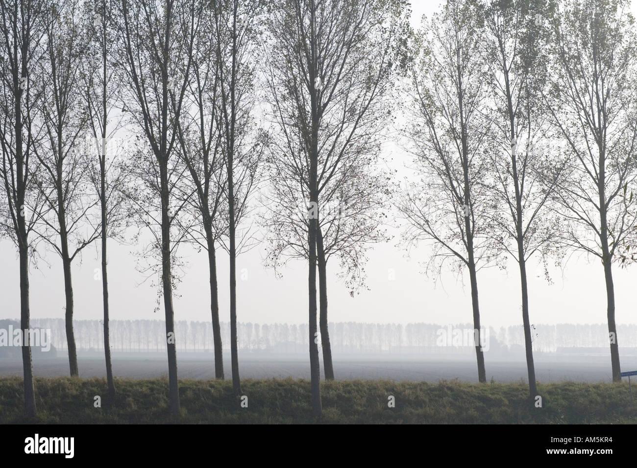 https://c7.alamy.com/comp/AM5KR4/poplars-as-wind-barrier-on-a-levee-or-dyke-or-dike-around-a-polder-AM5KR4.jpg
