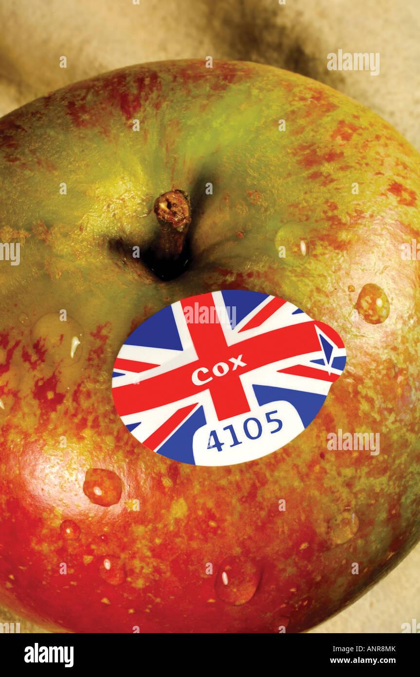 British Cox apple with supermarket produce label - Stock Image