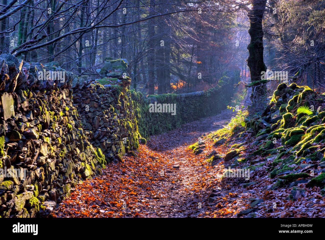 footpath-claife-heights-above-lake-windermere-lake-district-national-APBH0W.jpg