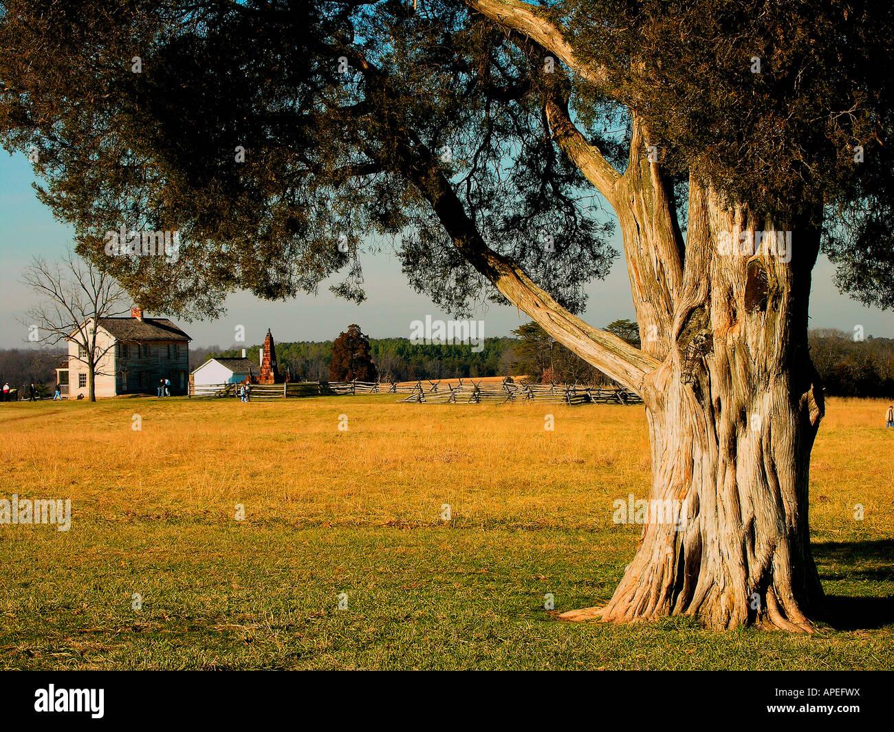 Cedar tree and Henry house, Manassas National Battlefield Park, Manassas, VA - Stock Image