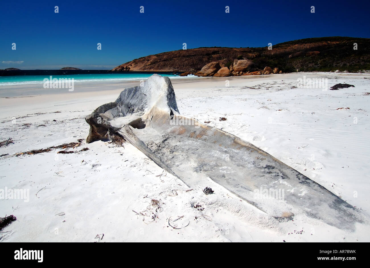 Whale skull buried in remote wilderness beach of Thistle Cove Cape Le Grand National Park Western Australia Stock Photo