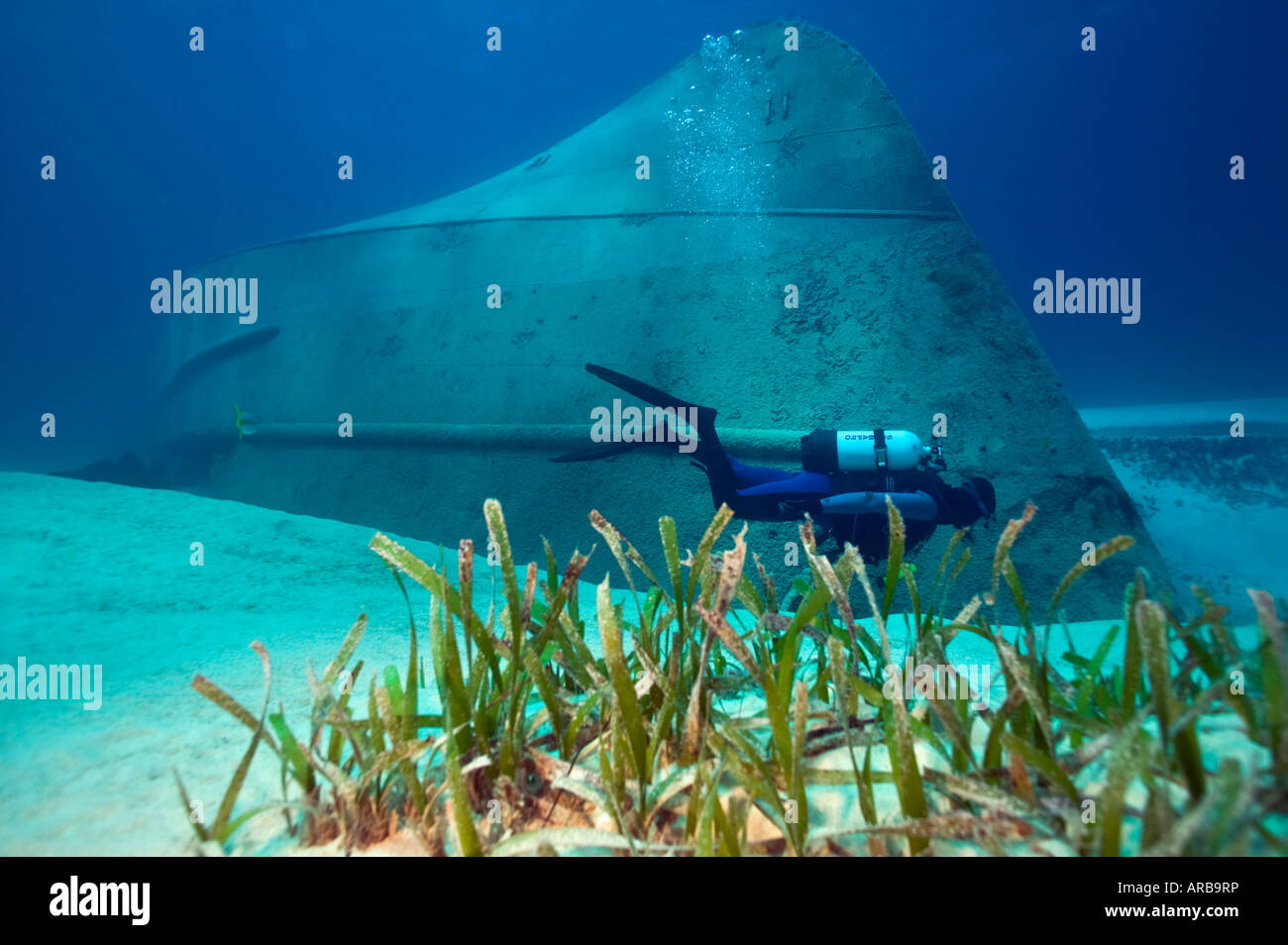 Diver surveys Alma B shipwreck near Cat Cay Bahamas Islands - Stock Image