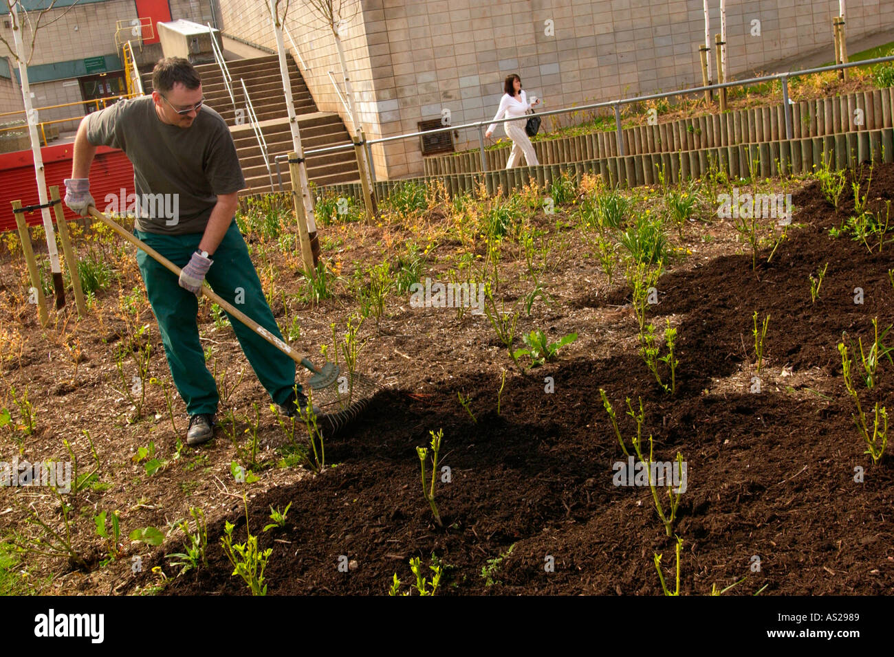 City council workers using compost as a mulch It was made from Stock ...