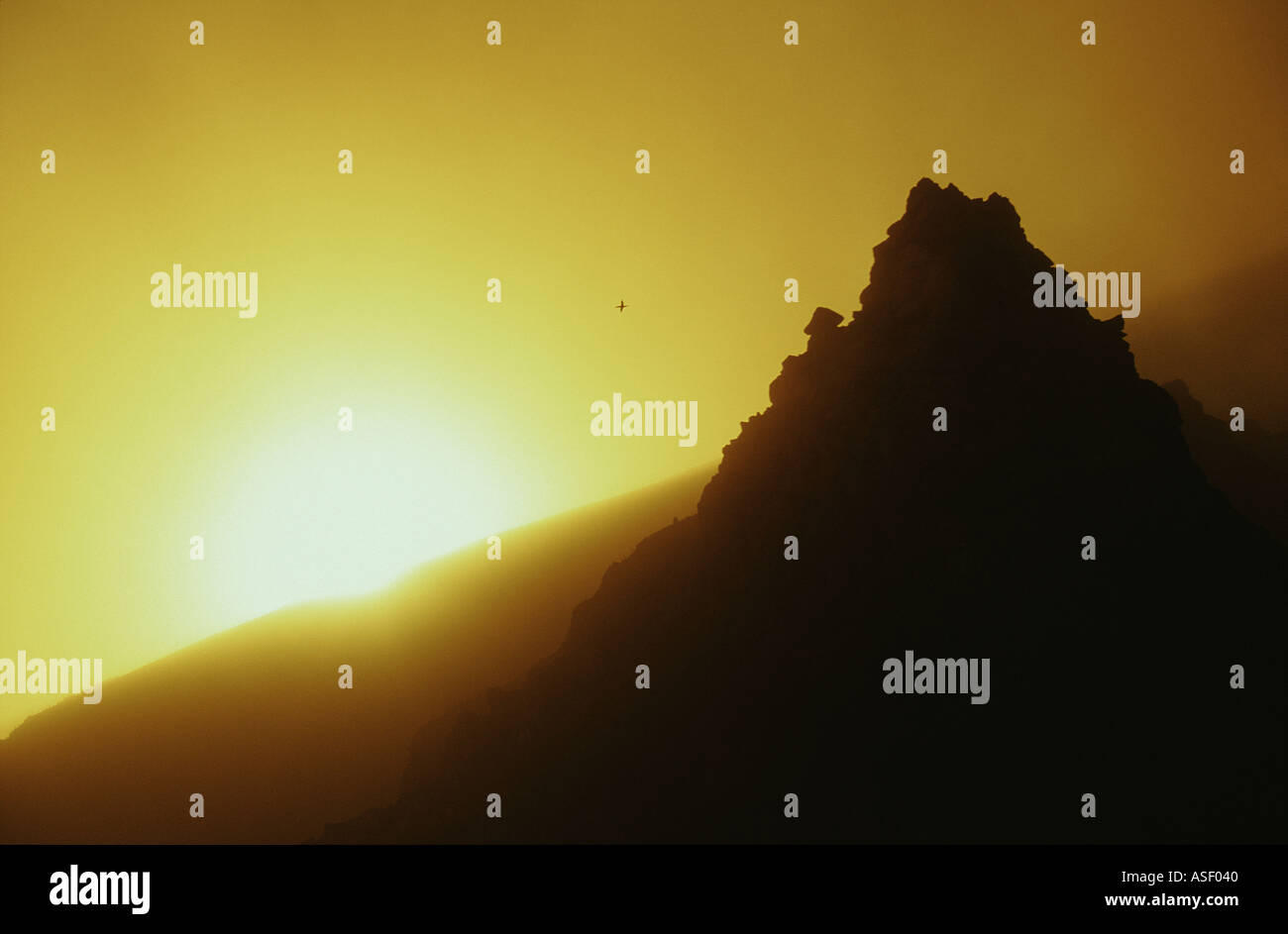 Gannet in distance flying through hazy sunset caused by steam and ash from active volcano White Island New Zealand - Stock Image