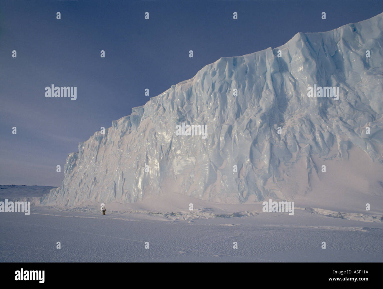 Person standing on fast sea ice next to terminal face of Barne Glacier Spring Ross Island McMurdo Sound Antarctica - Stock Image