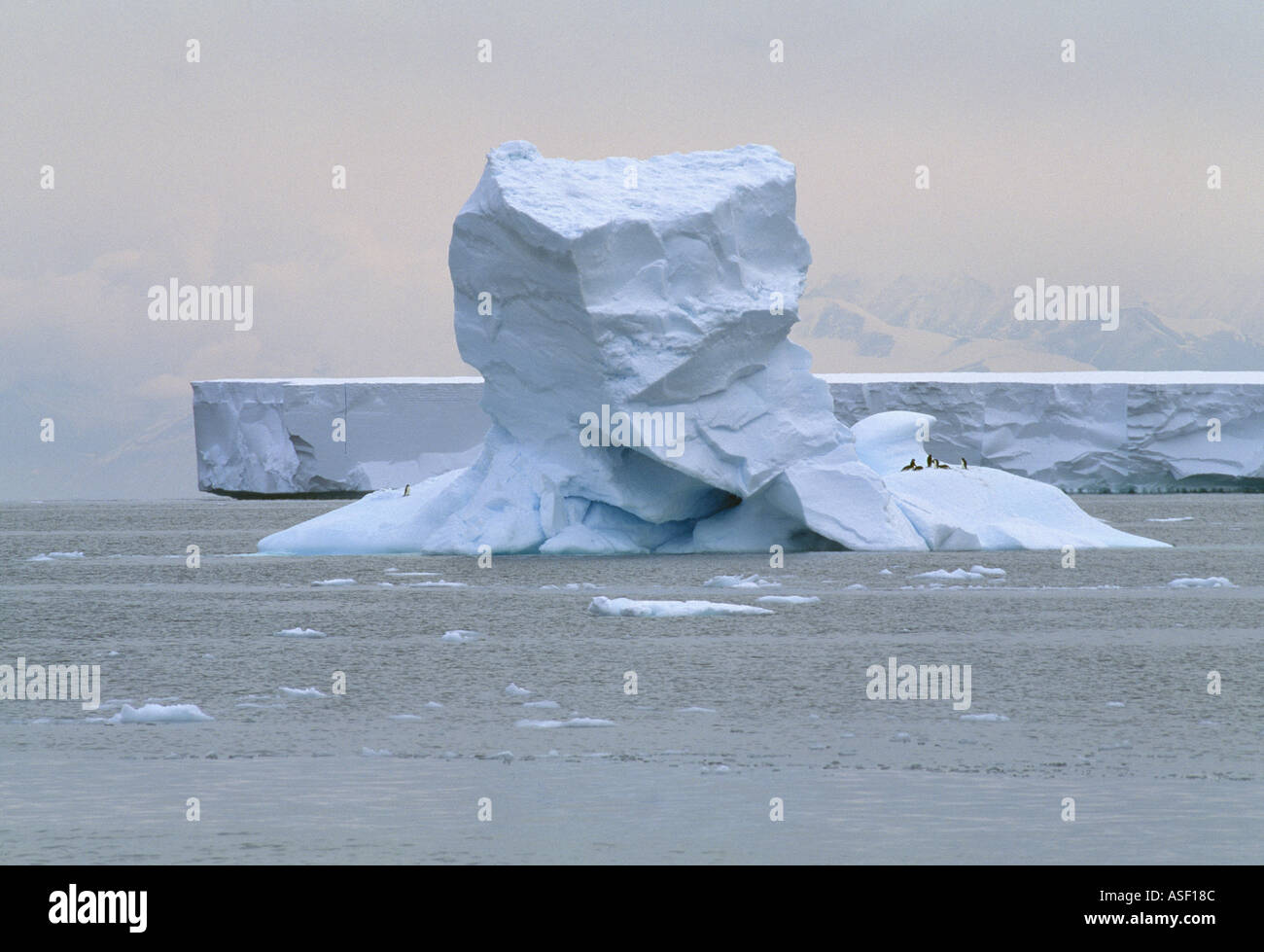 Iceberg with Adelie penguins Large tabular flat iceberg behind McMurdo Sound Ross Sea Antarctica - Stock Image