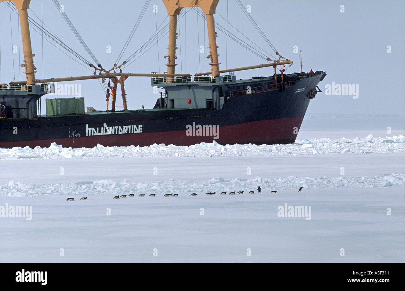 Adelie penguin Pygoscelis adeliae Group travelling on sea ice Italian cargo vessel beyond McMurdo Sound Antarctica - Stock Image
