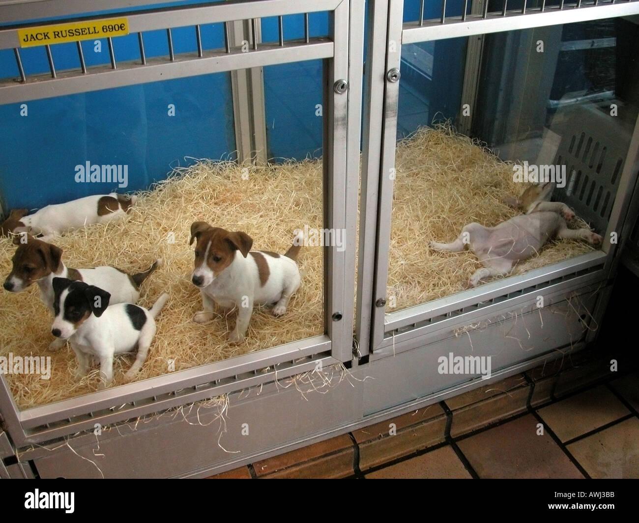 France Paris Pet Shop With Puppies For Sale Quai Des Megisseries