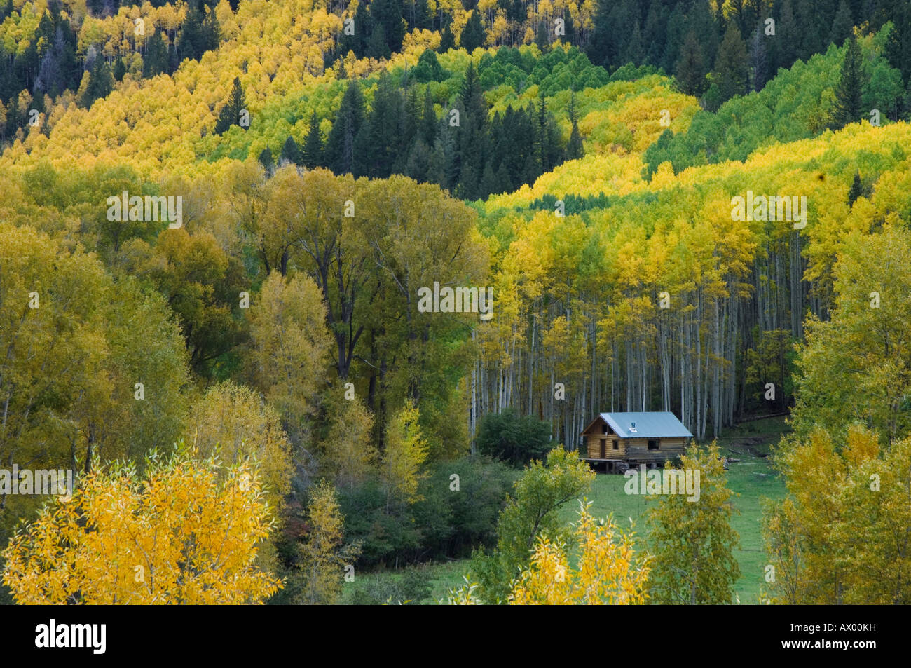 Log cabin aspen trees and Cottonwoods in fall colors Dolores San ...