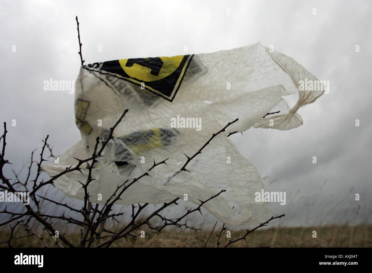 A carrier bag blown from a land fill site at Seal Sands near Midllesbrough Cleveland UK - Stock Image