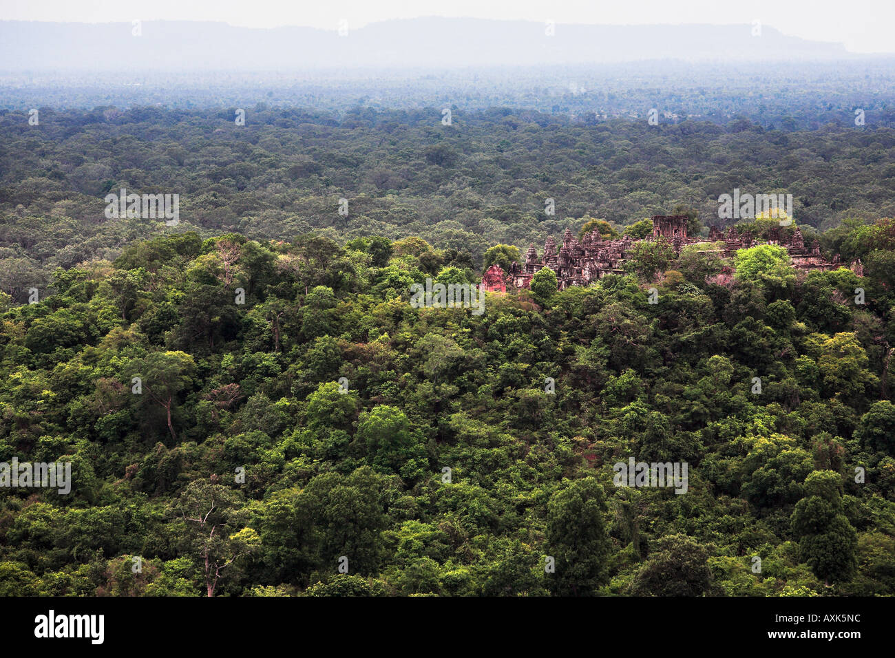 forest landscape with plants tress nature distance far hills mountains - Stock Image