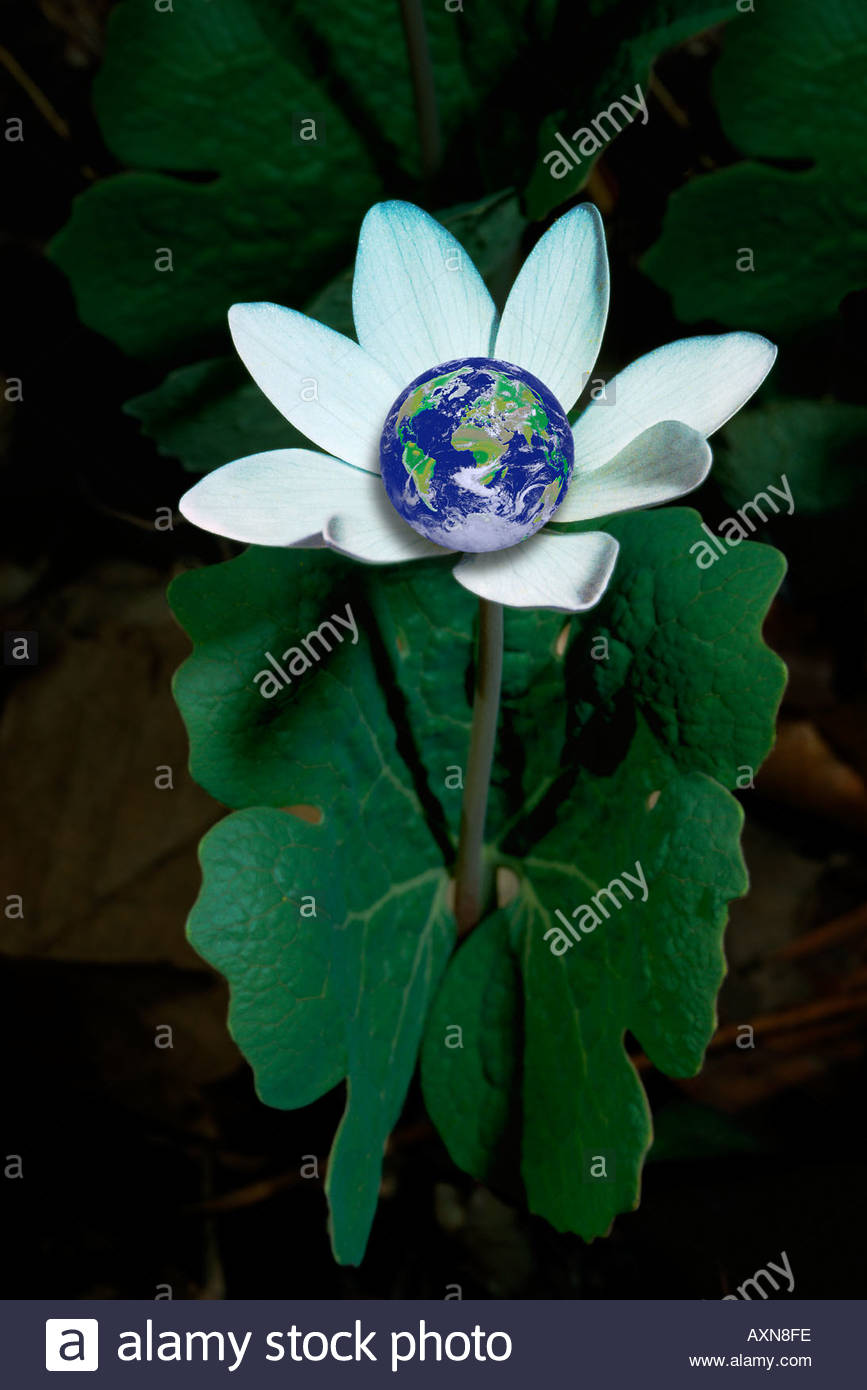 Planet earth in a wildflower - Stock Image