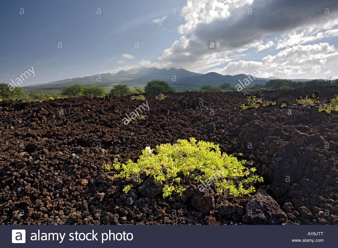 plants-establish-foothold-on-lava-field-
