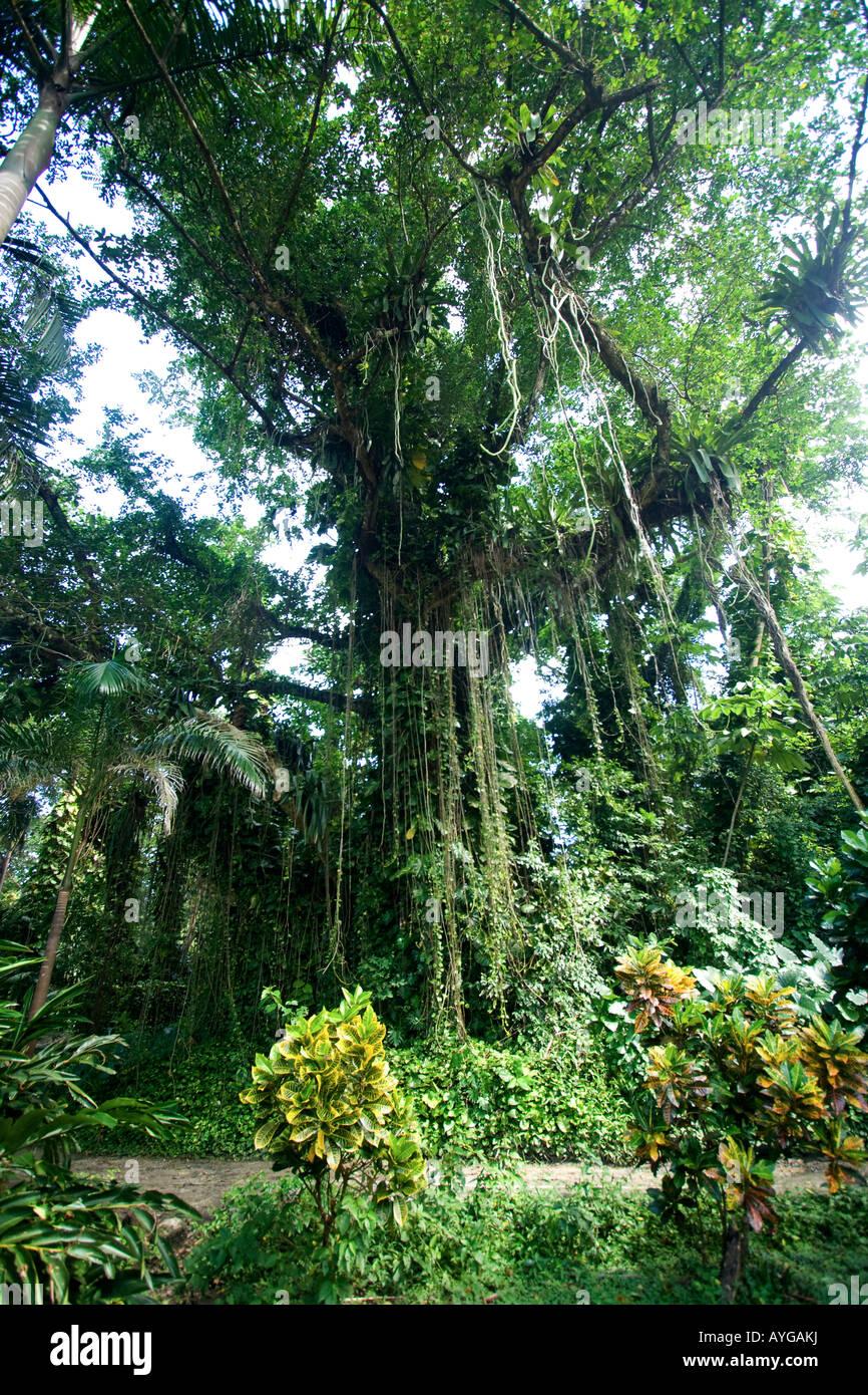 Jamaica Port Antonio Tropical landscape near Frenchmans Cove Stock Photo
