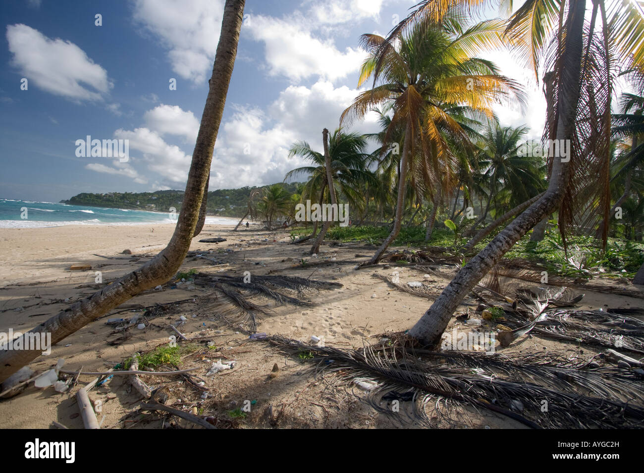 Jamaica Long bay at east coast after Hurricane Dean destroyd palm trees and beach bars and houses - Stock Image