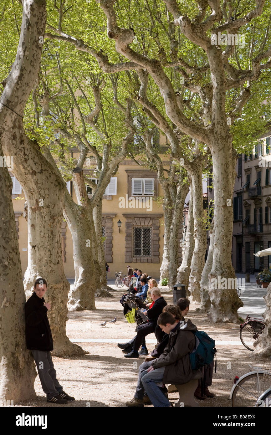 local people in Lucca Tuscany Italy relaxing at lunchtime in Spring below trees in Piazza Napoleone - Stock Image