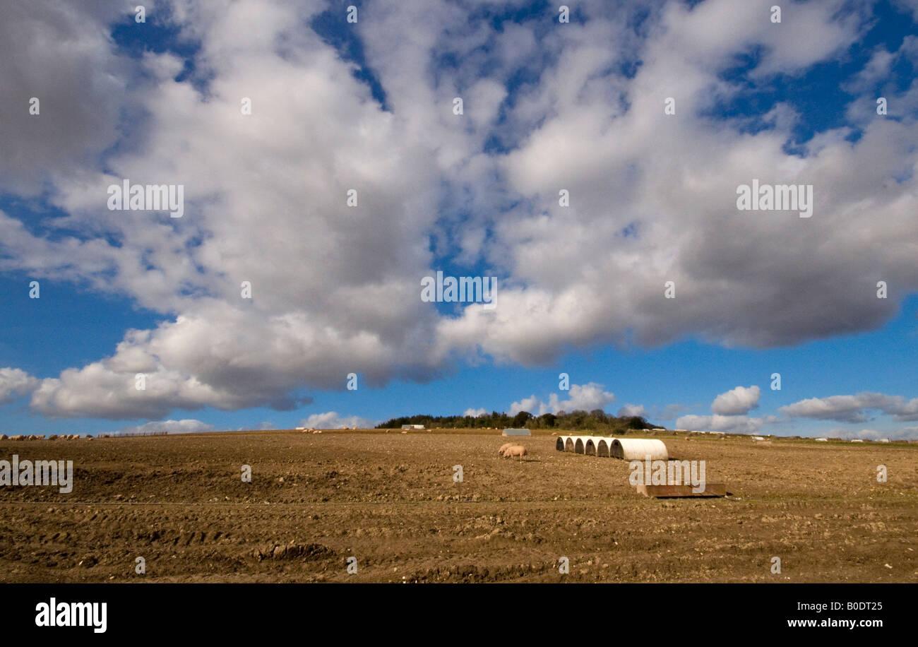 Pig farm near Hursley Hampshire England UK - Stock Image