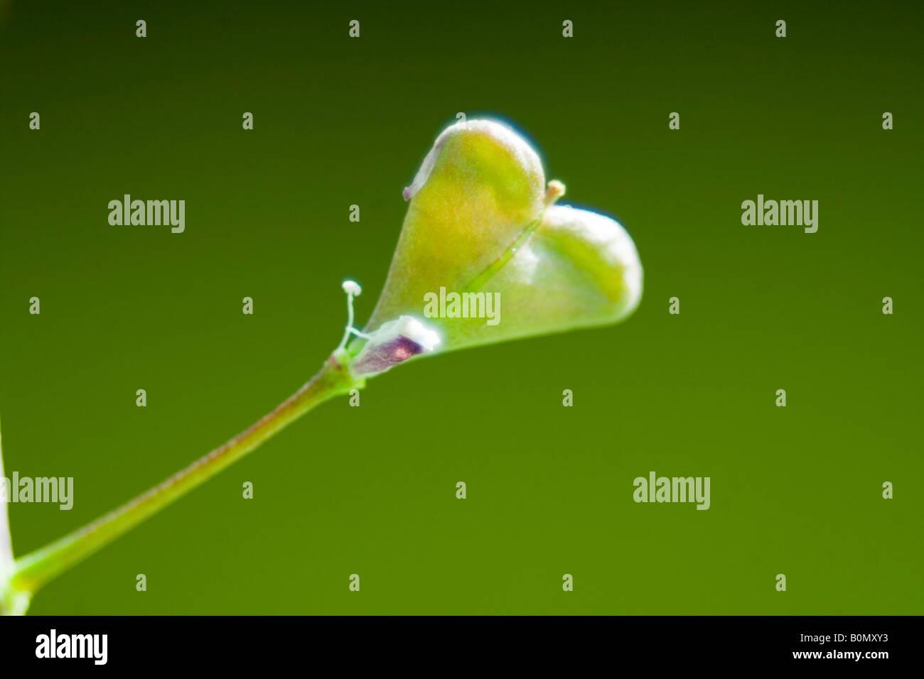 heart flower Stock Photo