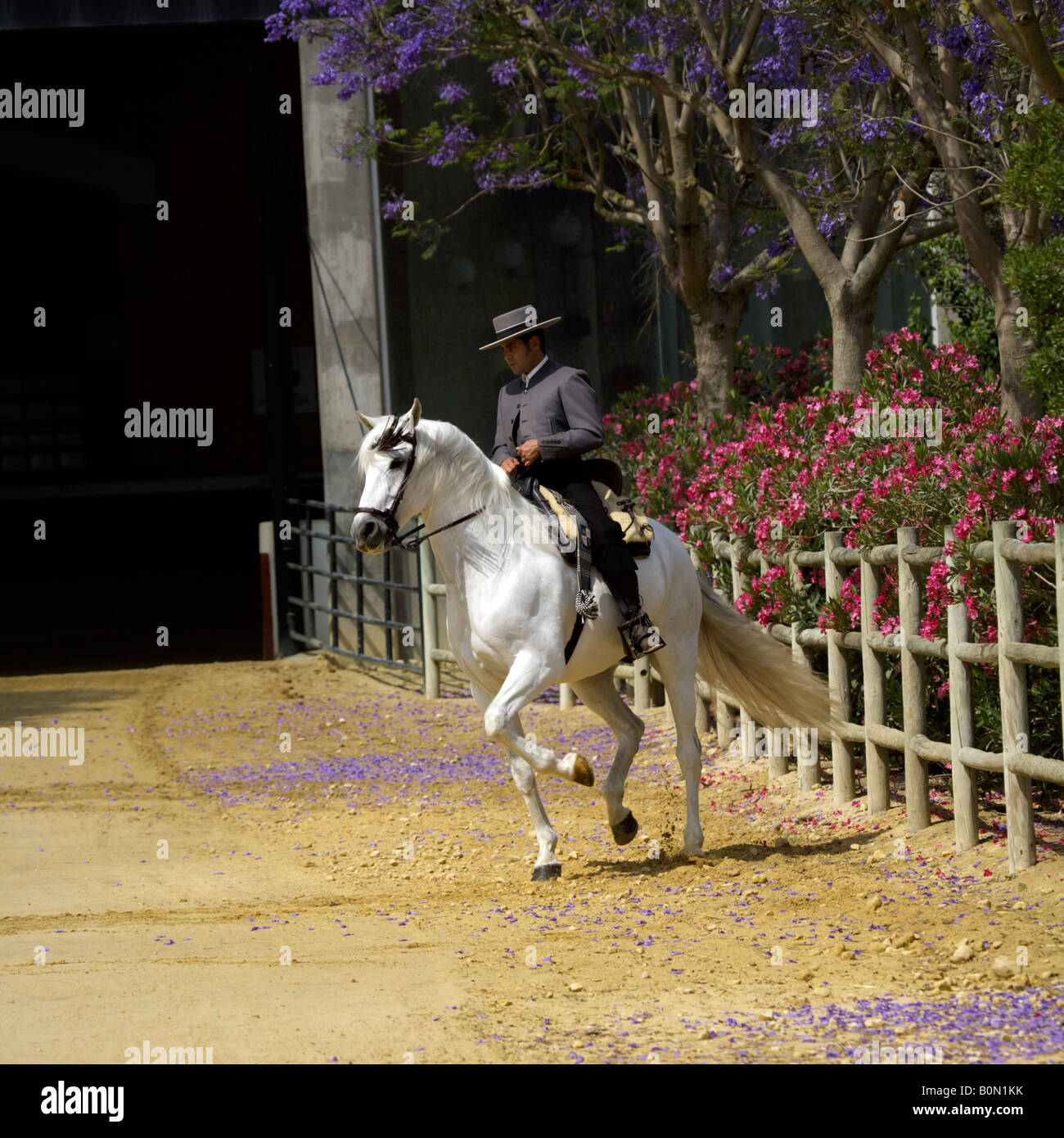 Fine Spanish horseman in traditional costume on a white Carthusian horse at Yeguada de la Cartuja stud, Jerez, Spain - Stock Image