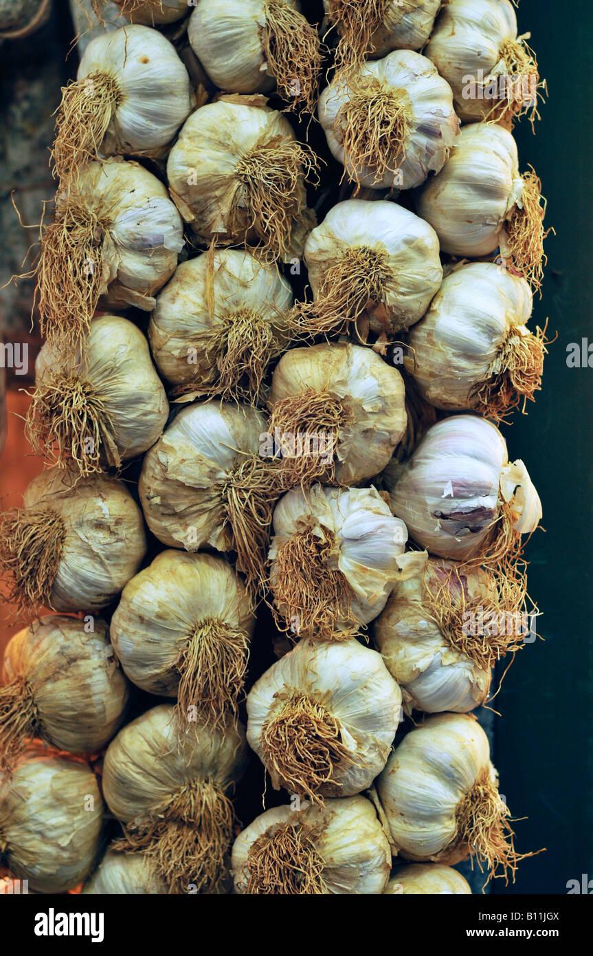 Garlic braid - Stock Image