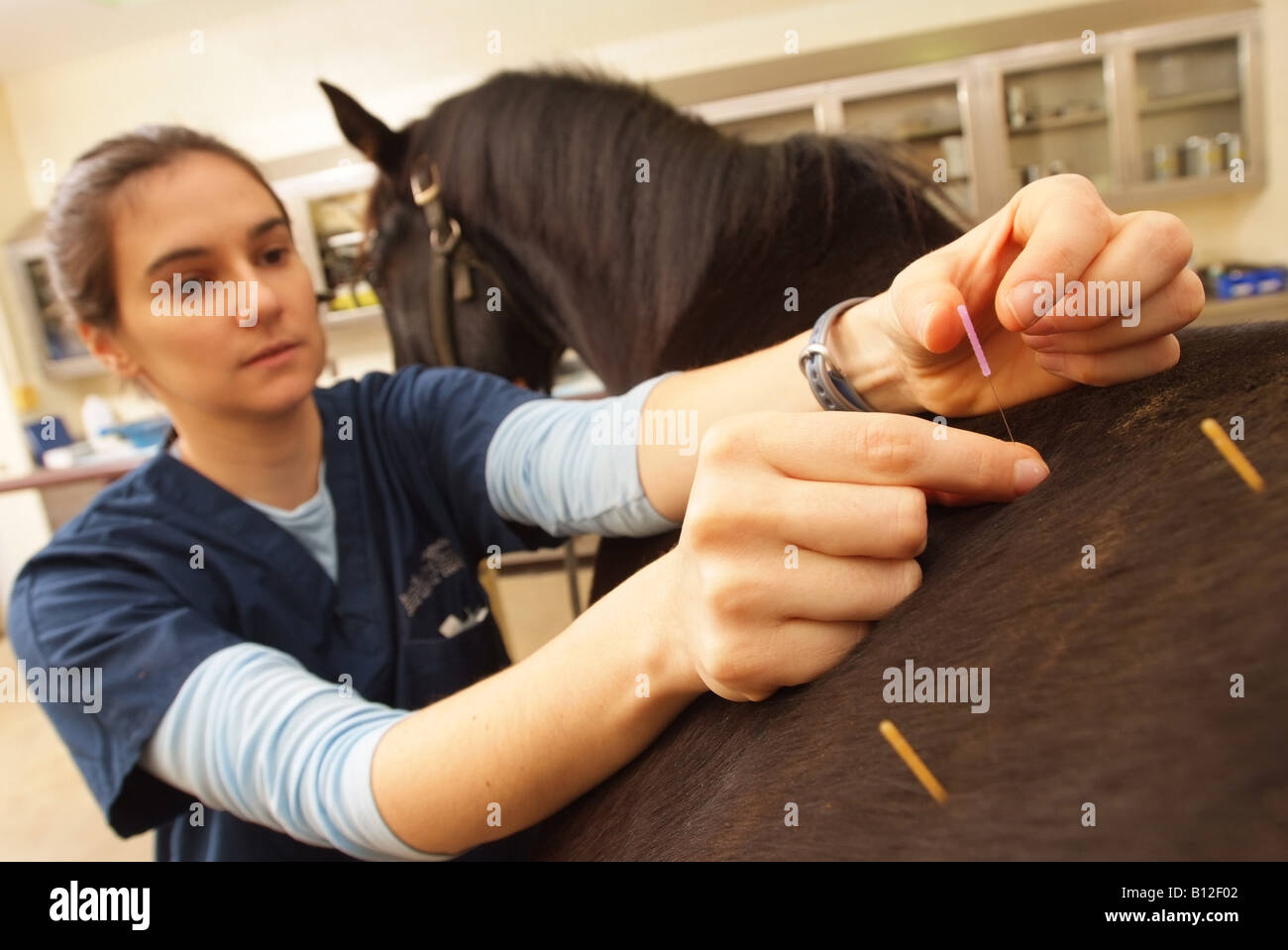 veterinarian-alison-smith-performs-acupuncture-on-a-horse-at-the-leesburg-B12F02.jpg