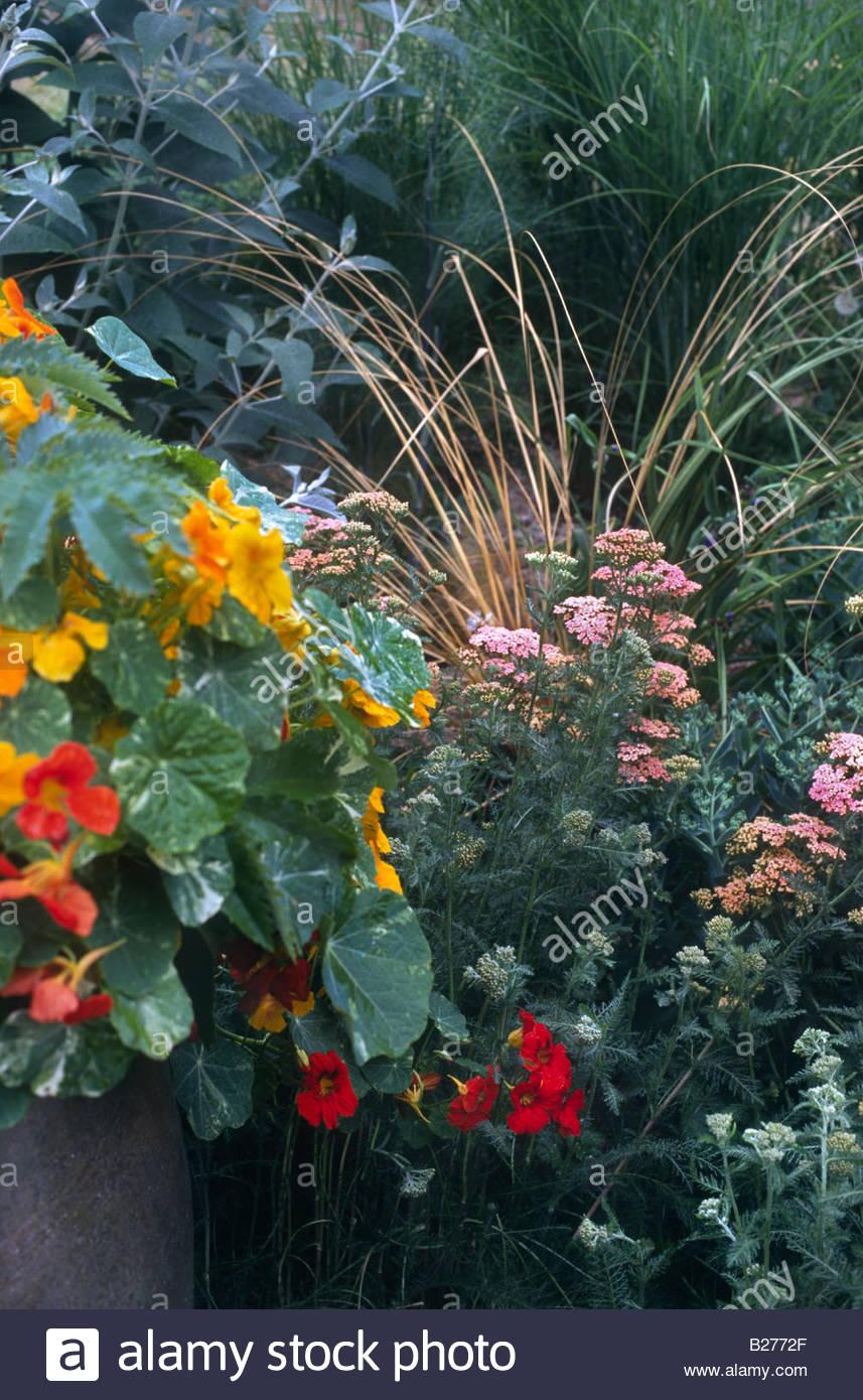 Summer Perennial Border With Pink Flowering Achillea Sp Grass Stock