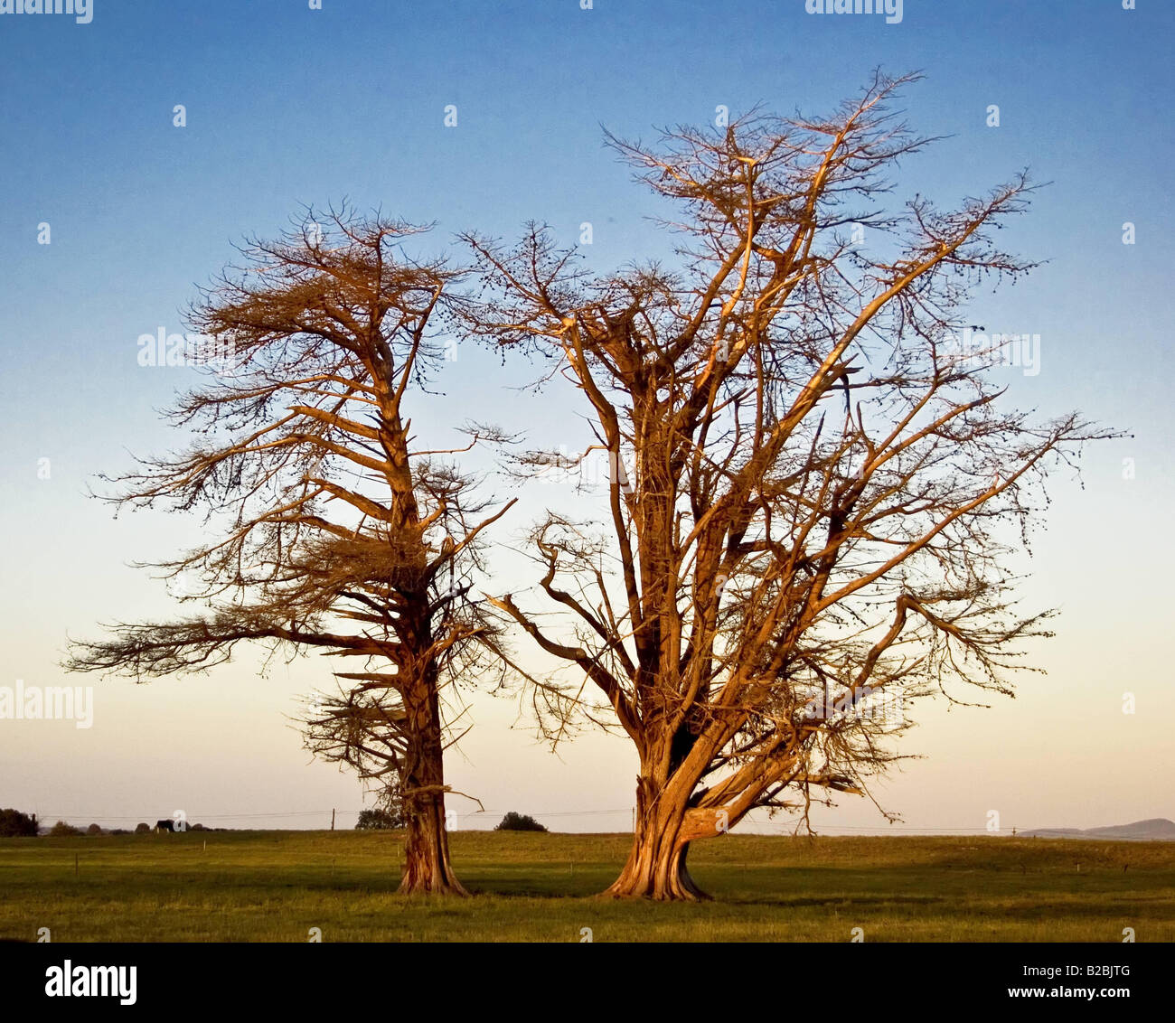 Trees in the field Date 21 12 2007 Ref B886 109833 0123 COMPULSORY CREDIT Stephen Power World Pictures Photoshot - Stock Image