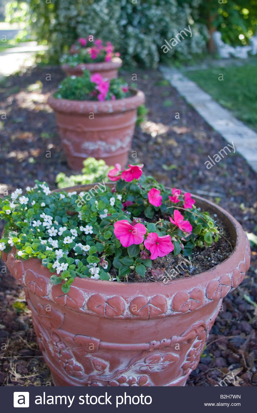 Terra Cotta Planters With Pink And White Flowers Line A Private