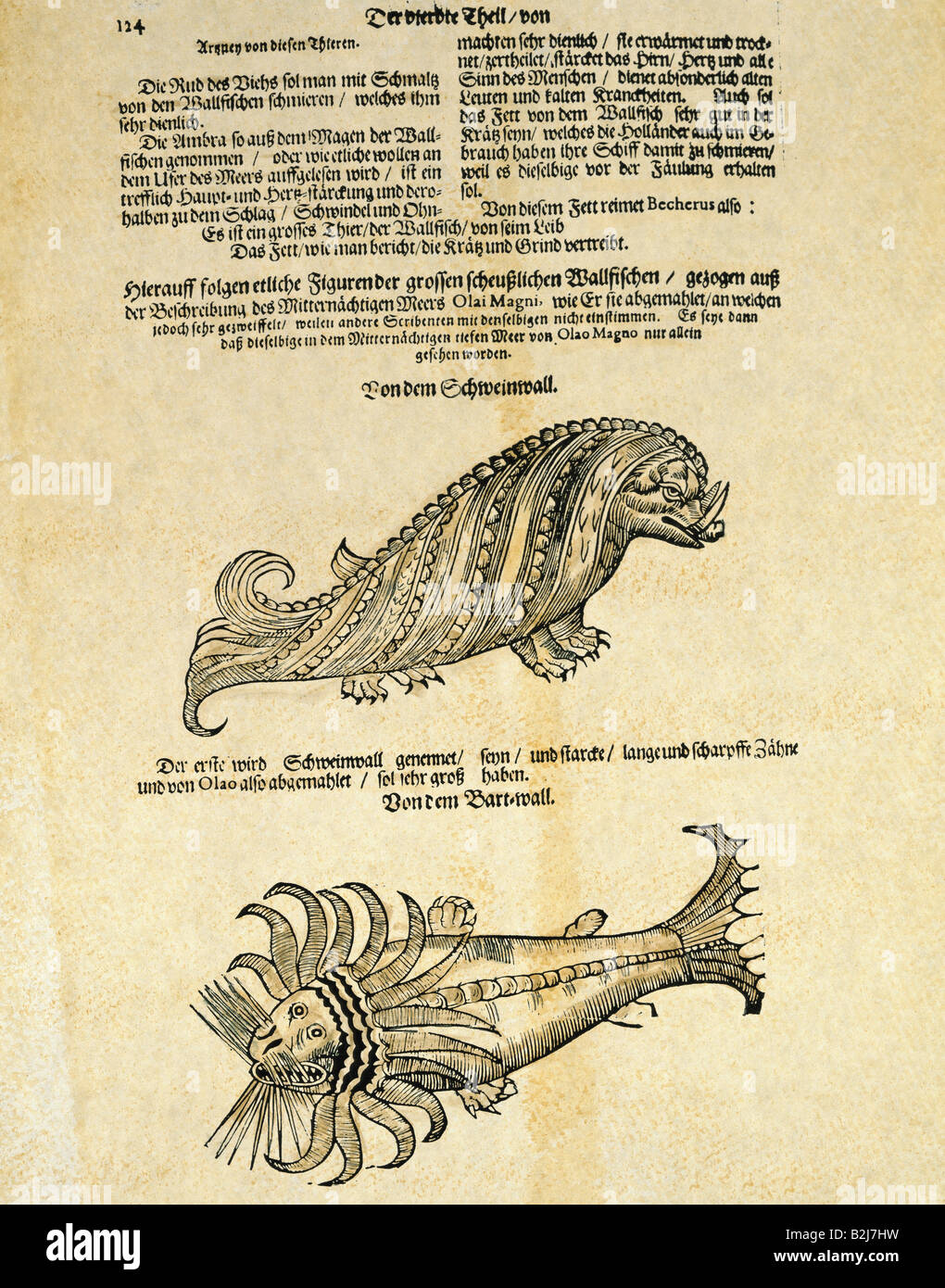 superstition, mythical creatures, hog wale and seal, woodcut, Michael Bernhard Valentini 'Museum museorum', - Stock Image