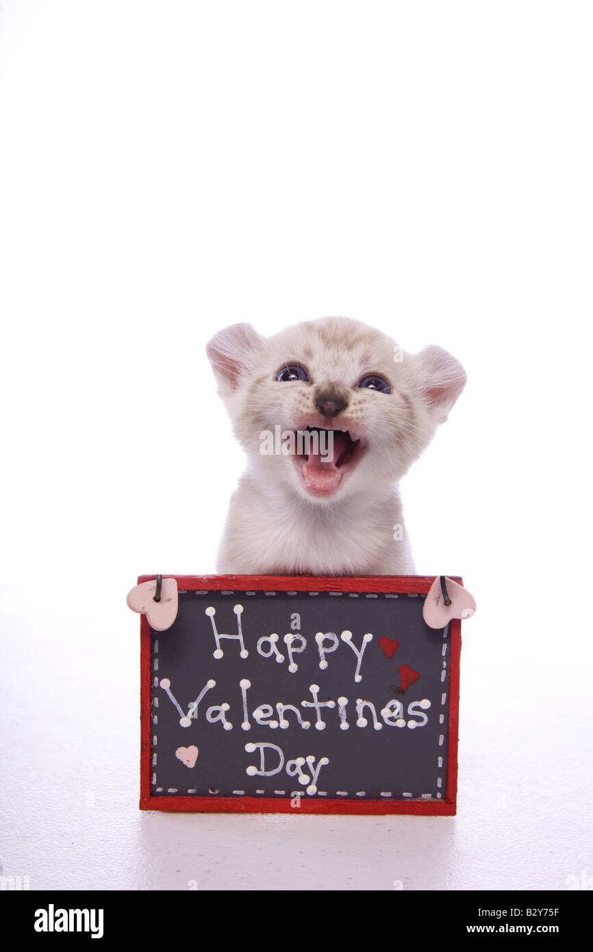 Kitten With Sign That Say S Happy Valentines Day Isolated On White