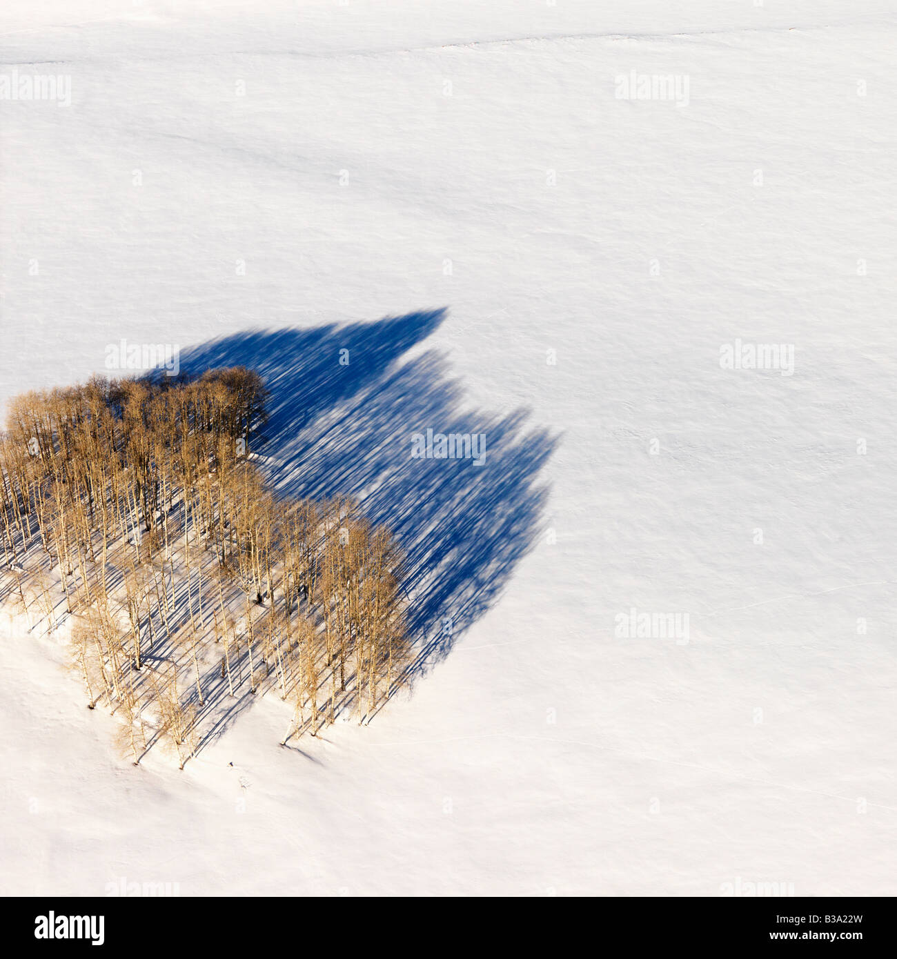 Aerial landscape of lone tree in snow rural Colorado United States - Stock Image