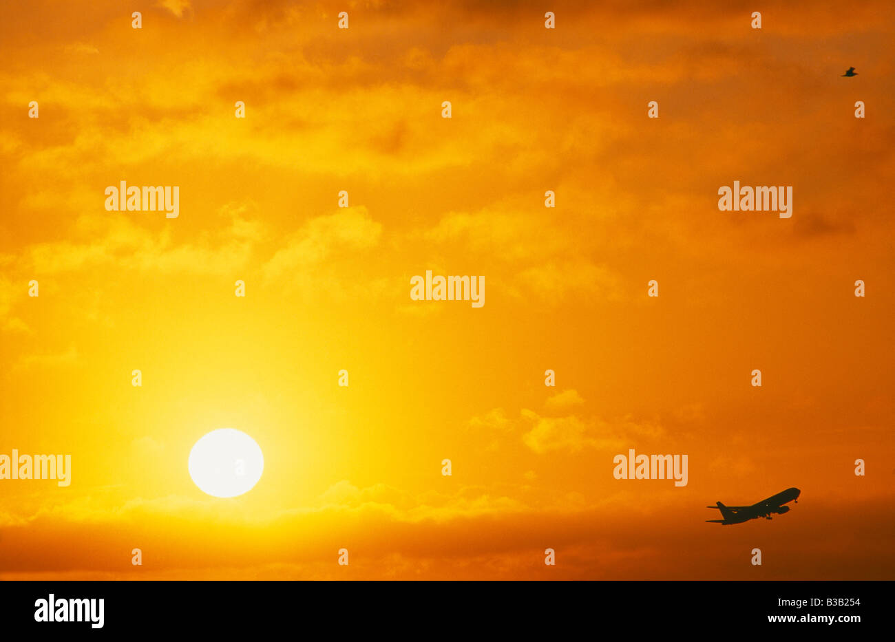 an aircraft taking off in front of the sunrise with a bird mirroring the plane, Heathrow, London, UK - Stock Image