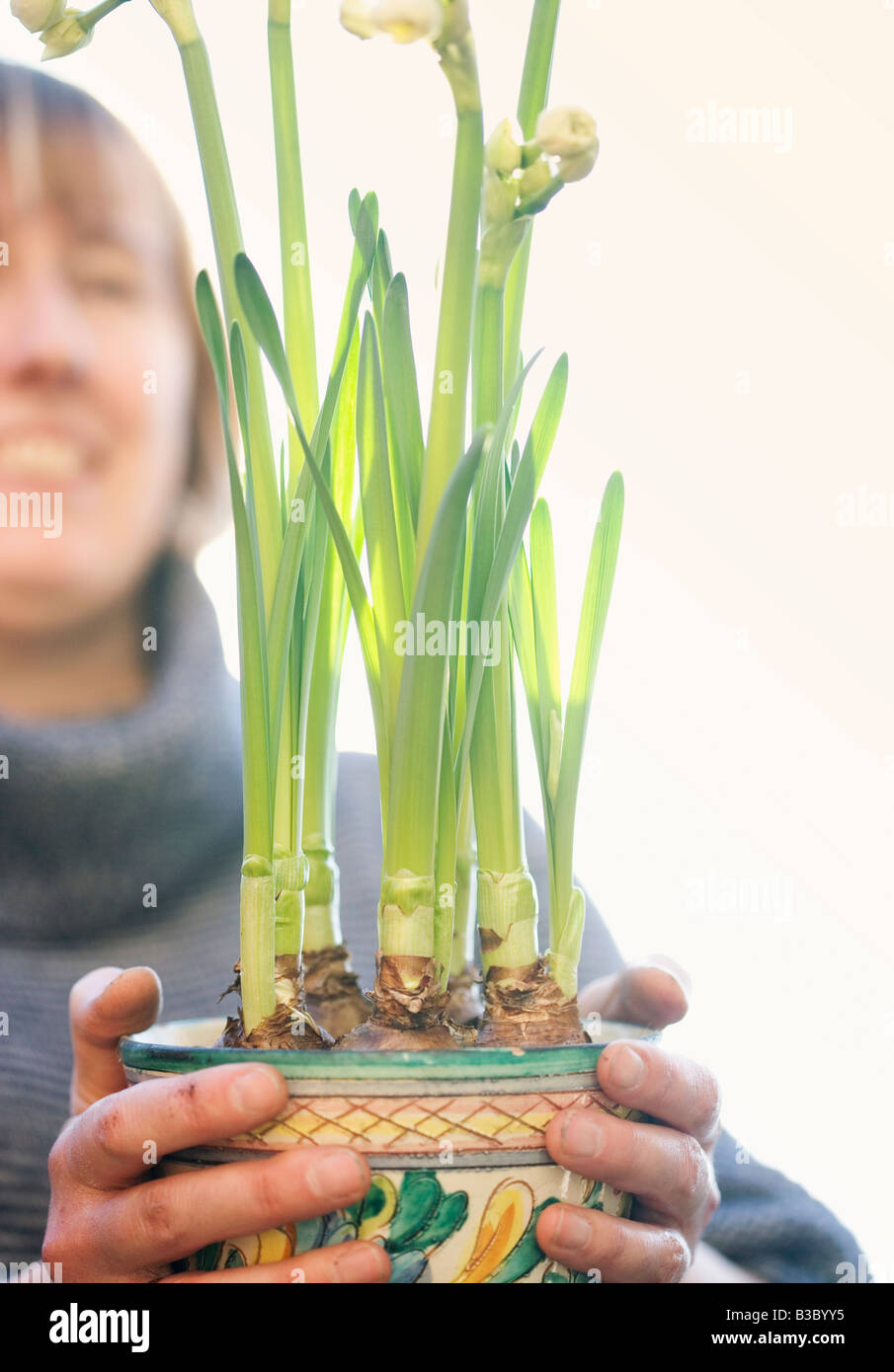 A woman holding a pot of daffodils - Stock Image