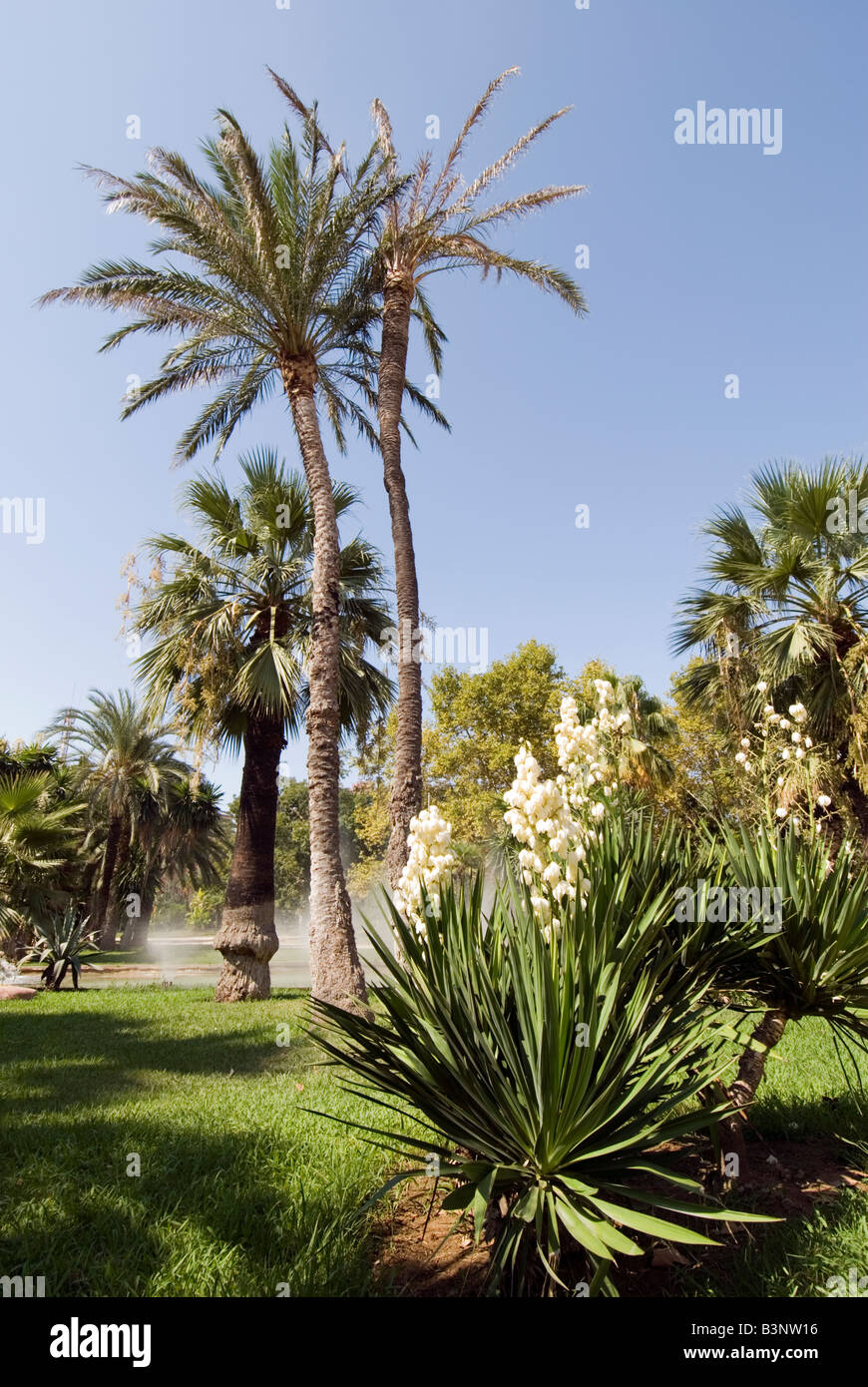 Palm trees in Jardin del Real Viveros in Valencia Spain - Stock Image