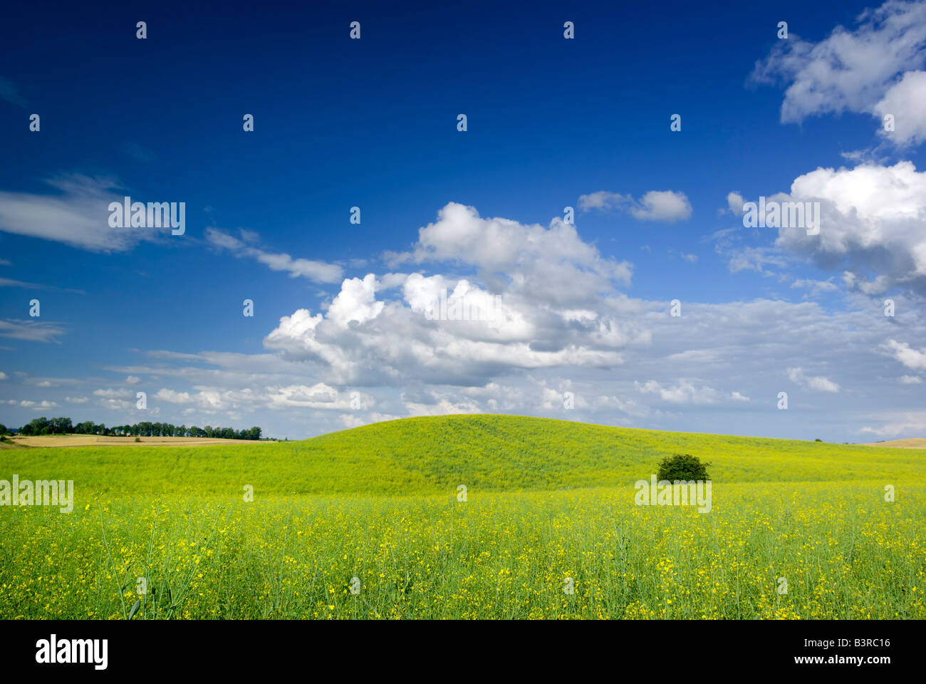 Summer landscape - saturated view of meadow. Europe, Poland. Adobe RGB (1998). - Stock Image
