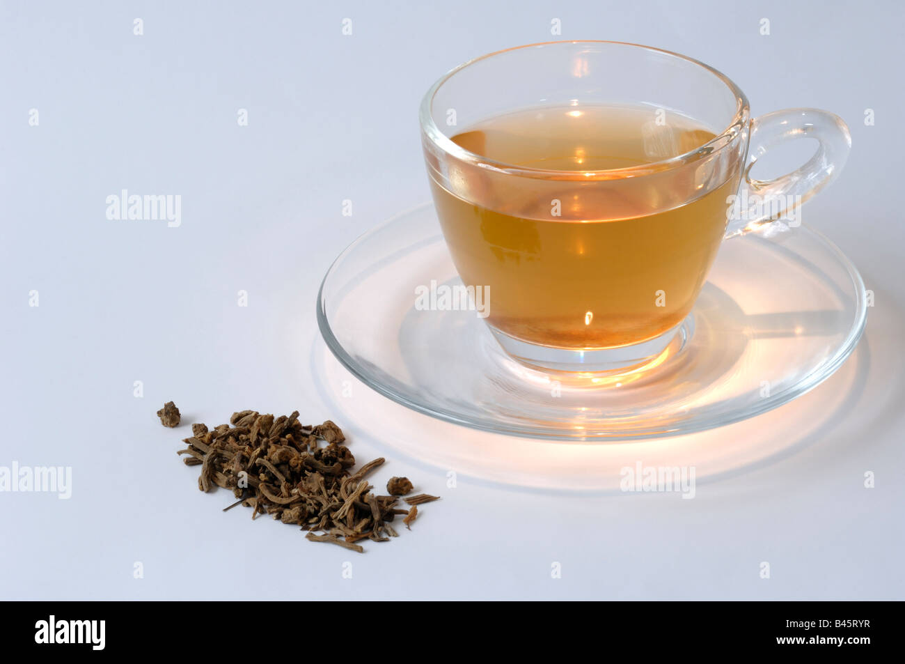 Valerian (Valeriana sp.), dried roots and a cup of tea, studio picture - Stock Image