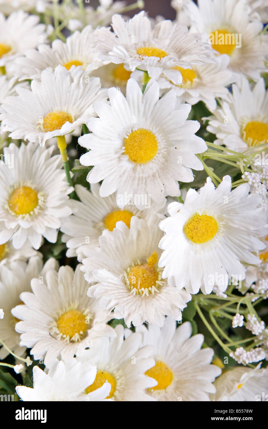 Great Image Of Some White Silk Daisy Flowers Stock Photo 20399145